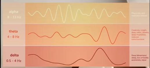 Мозок нарощує активність, переходячи від дельти до тети до альфа хвиль мозку