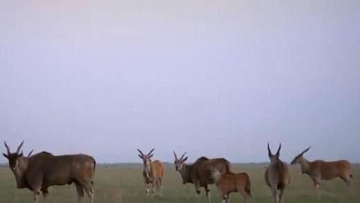 Мандрівка Україною. Асканія-Нова – найбільший заповідний степ Європи
