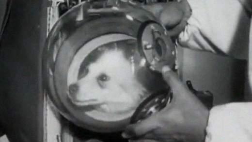 Неизвестные факты о первых собак, которые отправились на орбиту Земли