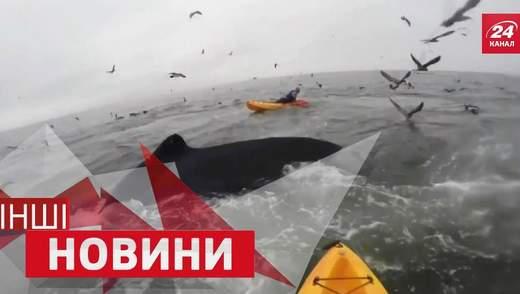 ІНШІ новини. Несподівані кити. Екстремальний паркур