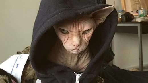 Постійно обурений кіт став зіркою мережі: фото