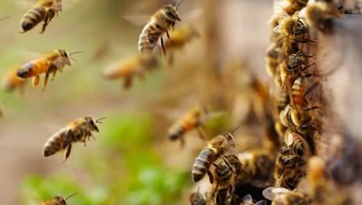 Пчелы сорвали рейс самолета из Москвы в оккупированный Крым