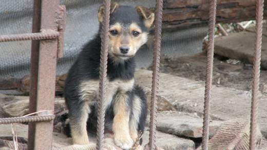 Конвеєр смерті: чому в Україні масово вбивають безпритульних тварин