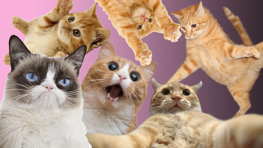 Всесвітній день котів: найвеселіші фото з котами, які змусять посміятися