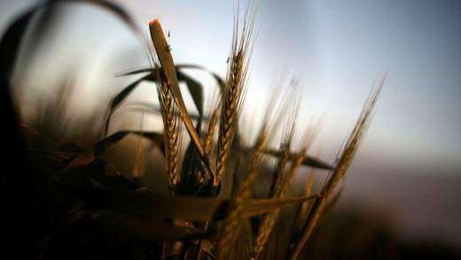Рейдерство в Украине: как остановить массовые нападения на фермеров