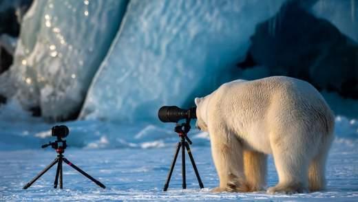 Объявили победителей конкурса самых смешных фото дикой природы: забавные кадры