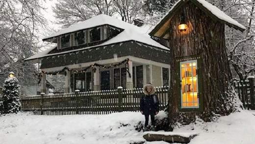 Волшебный домик с книгами: в США женщина превратила мертвое дерево в библиотеку – фото