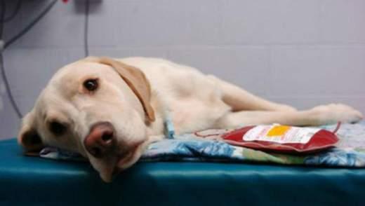 Во Львове открыли первый в Западной Украине банк крови для собак