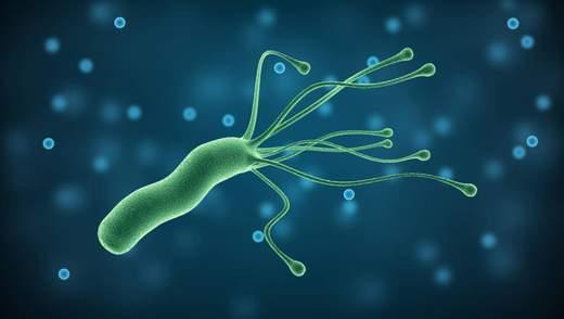 Хеликобактер пилори: все об опасной и самой распространенной инфекции, которая вызывает рак