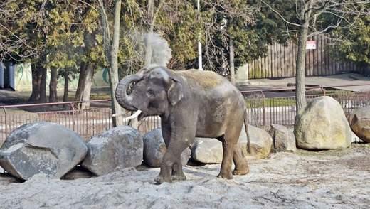 В киевском зоопарке рассказали о режиме работы на время карантина