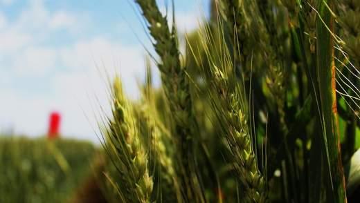 Вето Зеленського, втрачені паї і прогнози на урожай-2020: найважливіші агроновини тижня