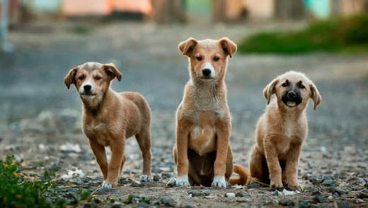 Чому косметику тестують на тваринах: 10 причин від неї відмовитися