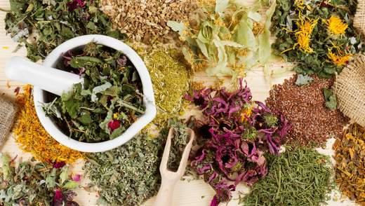 ВООЗ дозволила тестувати лікарські трави проти коронавірусу: чому це дивно