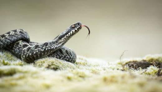 Біля Львова через коронавірус закрилась перша в Україні зміїна ферма