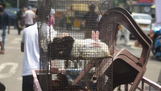 Кролики и свиньи: Европарламент требует запретить фермерам держать животных в клетках