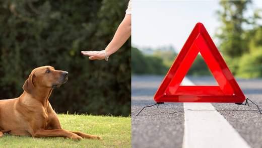 Жінка жорстоко виховувала собаку, водій збив хлопців на пішохідному переході – Ти дивись