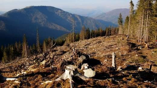 Загрожує велика екологічна катастрофа, – активіст про вирубку лісів у Карпатах