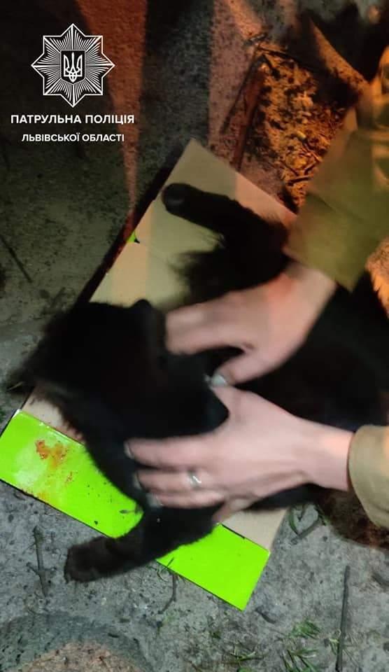 Заважали нявканням: у Львові чоловік викинув кошенят з вікна багатоповерхівки – фото