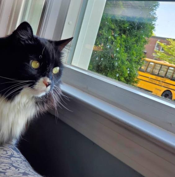 Ці коти вже зібралися до школи: кумедні фото