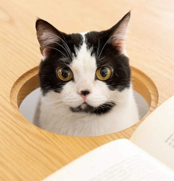 Щоб обідати разом з улюбленцем: в Японії розробили стіл з отвором для кота
