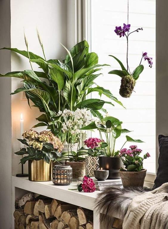 Як не використовувати рослини в інтер'єрі