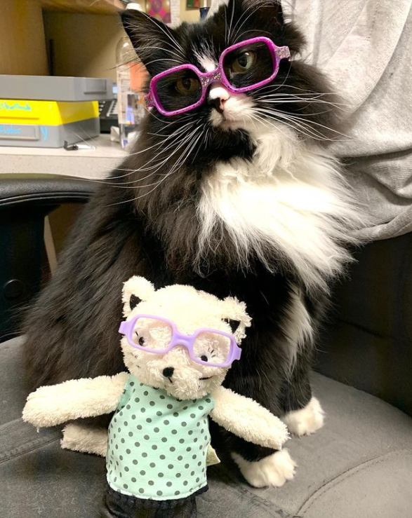 Коли діти бачать кішку в окулярах, то хочуть теж їх одягнути
