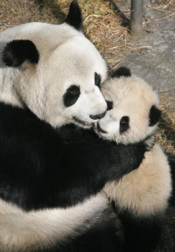 Очень милая мама и ее детеныш