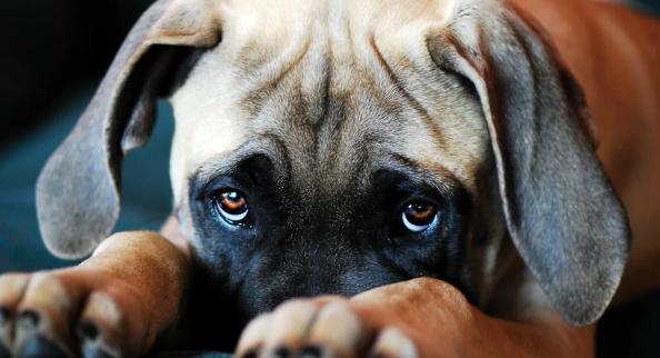 Крик хозяина разрушает доверие собаки