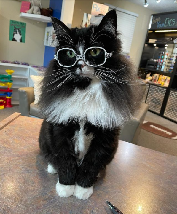Трюфель показує дітям, що носити окуляри зовсім не страшно