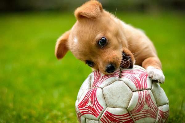 Ігри важливі для правильного розвитку собаки