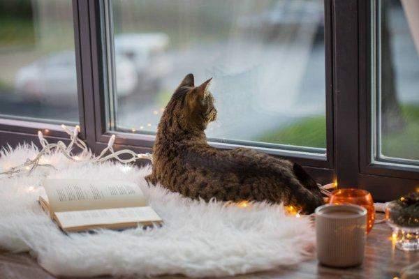 Позаботьтесь о том, чтобы кошке жилось комфортно