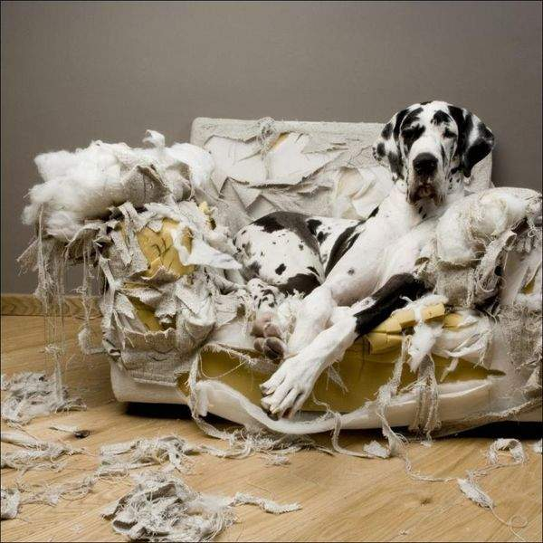 У поганих звичках тварин зазвичай винні господарі