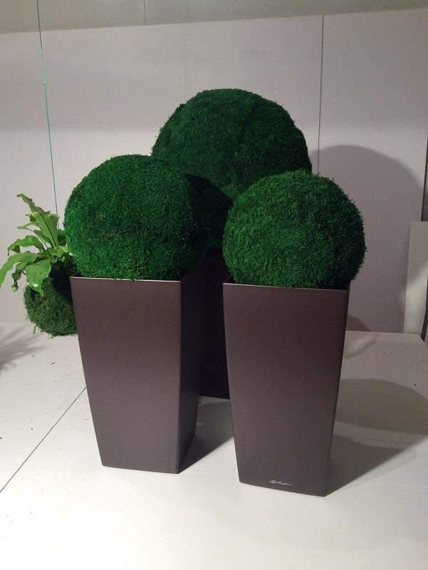 Великі вази з мохом