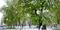 Зимова весна у Кропивницькому