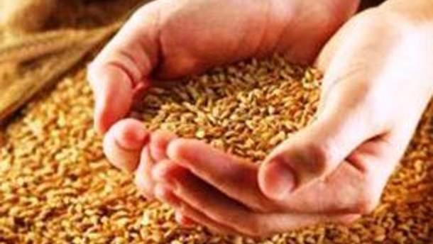Квоти на пшеницю та ячмінь будуть
