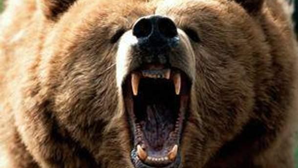 Ведмідь вирвався на волю