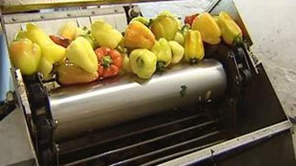 Работу производителей консервации блокируют дорогие овощи