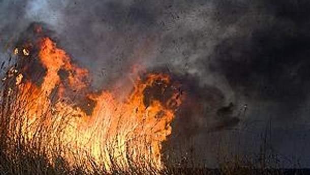 Пожар может перекинуться на лесной массив