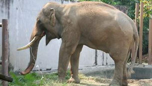 Українці хочуть отримати від власника слона компенсацію