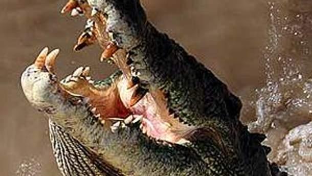 Обама будет застрахован на случай нападения крокодилов