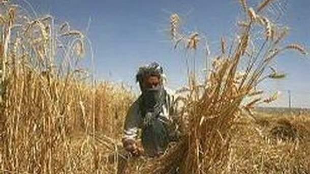 Из-за засухи не удалось собрать достаточно урожая