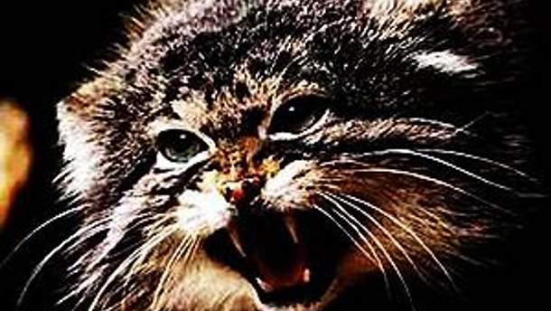 Кот умер в ветеринарной клинике