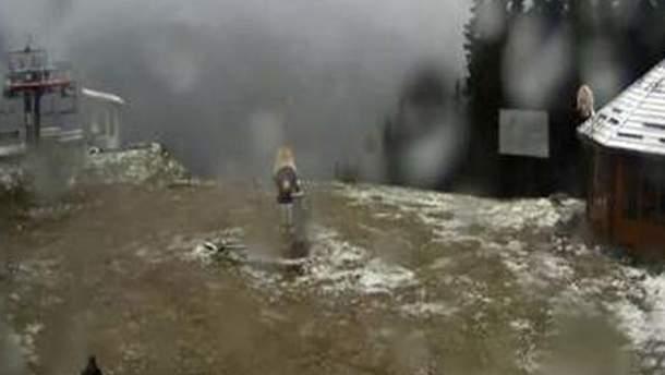 Перший сніг у Карпатах