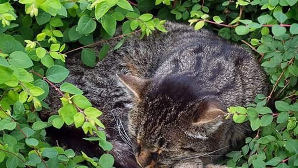 Кота нашли в кустах