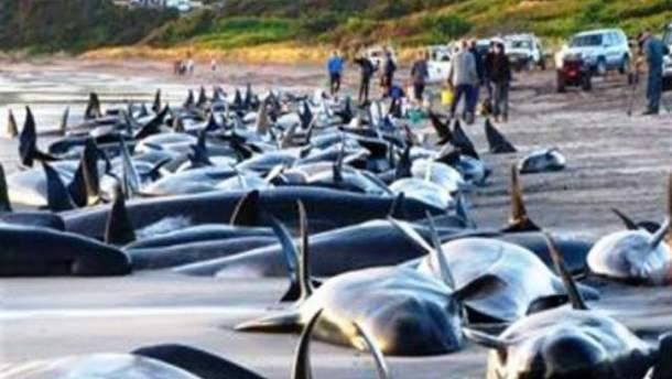 Мертвые дельфины