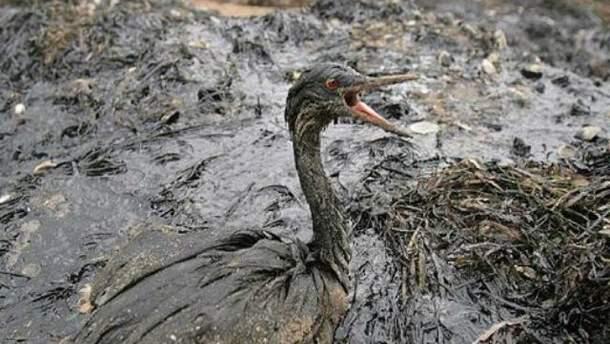 Наслідки витоку в море мазуту