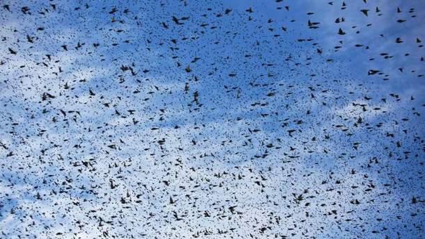 В Ізраїлі птахи влаштували в небі карколомне шоу (Фото)