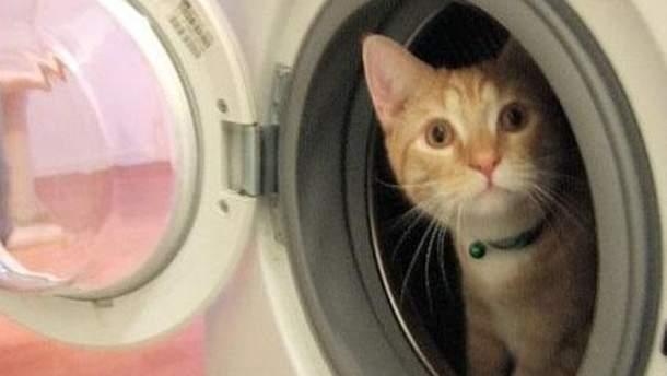 Жінка випадково випрала кота у машинці