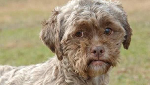 В США живет пес с человеческим лицом (Фото)