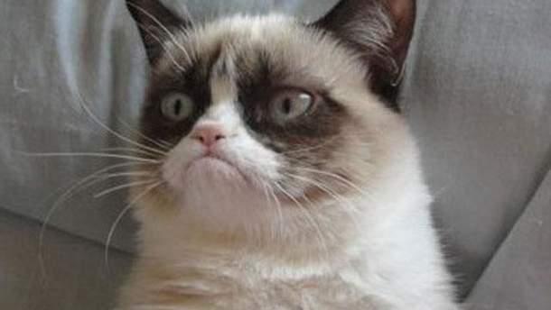 Злий кіт став мемом року